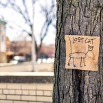 Things You Can Do For Your Lost Pets