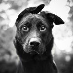 Read the Impressive Story of a Homeless Dog: Pasteur