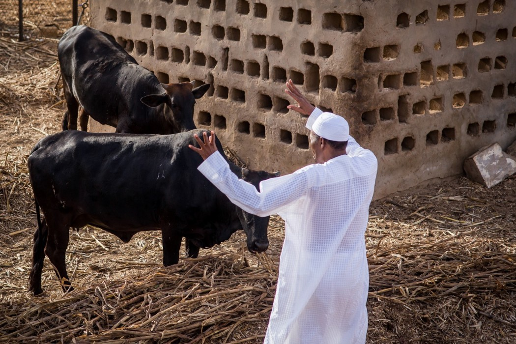 Buhari says he will retire to his farm after tenure ends